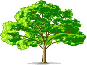 genealogy_family_trees.jpg